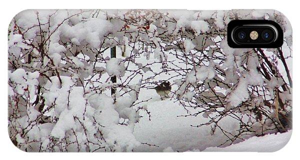 Catoctin Mountain Park iPhone Case - Bird In The Bush by Chuck  Hicks