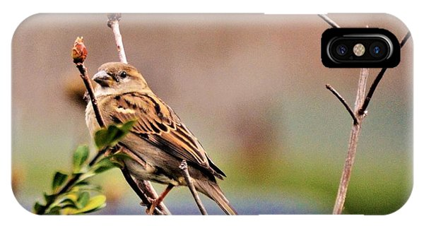 Bird In The Cold IPhone Case