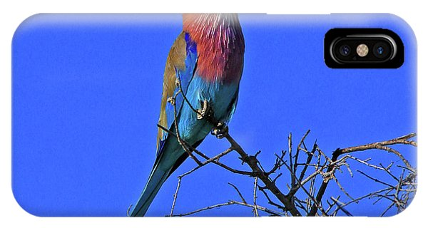 Bird - Lilac-breasted Roller IPhone Case