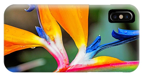 Bird Of Paradise After The Rain IPhone Case