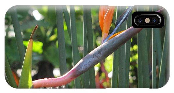Bird Of Paradise Dripping IPhone Case