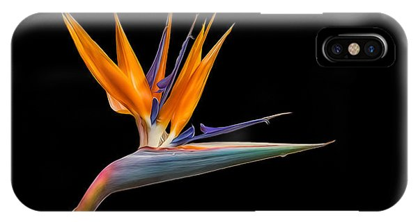 Bird Of Paradise Flower On Black IPhone Case