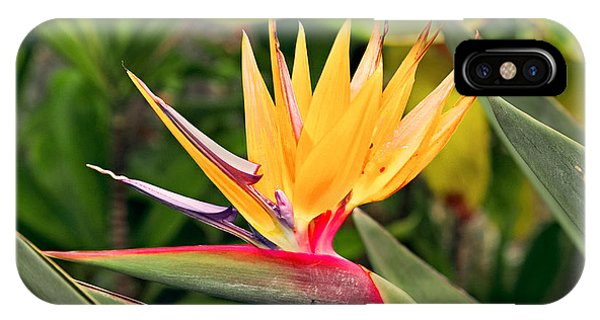 Bird Of Paradise Photo Phone Case by Peter J Sucy