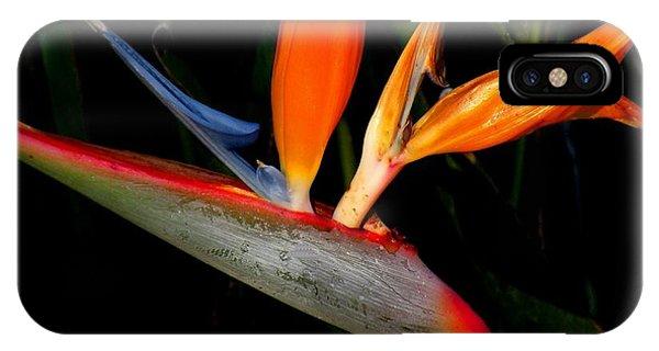 Bird Of Paradise Phone Case by Rosalie Scanlon