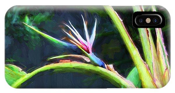 Bird Of Paradise Strelitzia Reginae 003 IPhone Case