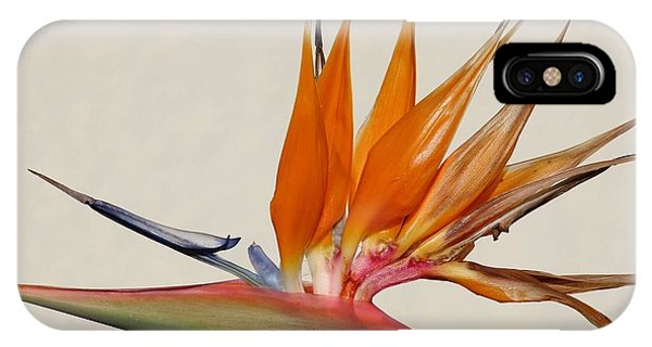 Bird Of Paradise With White Background IPhone Case
