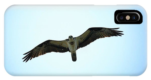 Bird Of Prey IPhone Case