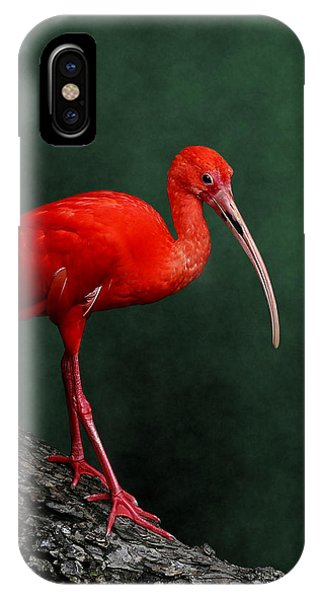 Bird On A Catwalk IPhone Case