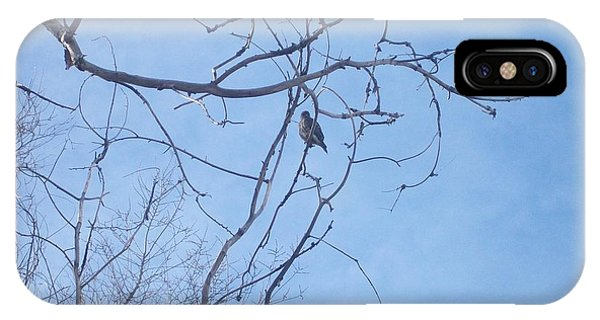 Bird On A Limb IPhone Case