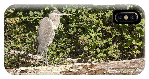 Bird On A Log IPhone Case