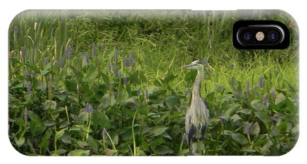 Bird Waiting IPhone Case