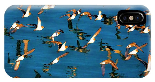 birds in the Bay IPhone Case