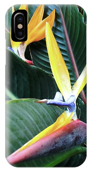 Birds Of Paradise With Leaves IPhone Case