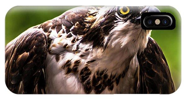Birds Of Prey Sonoma County IPhone Case