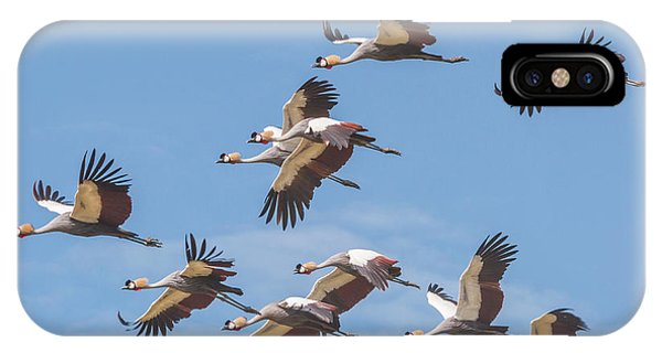 Birds Of The Same Feather. IPhone Case