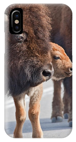 Bison And Calf IPhone Case