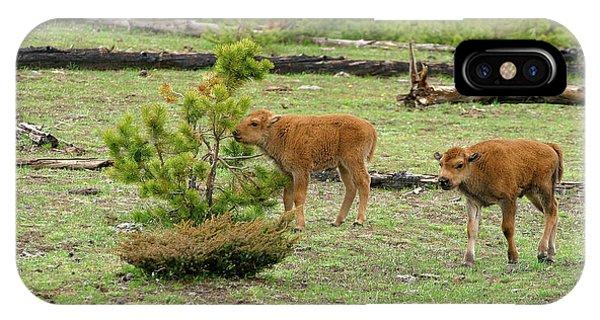 Bison Calves IPhone Case