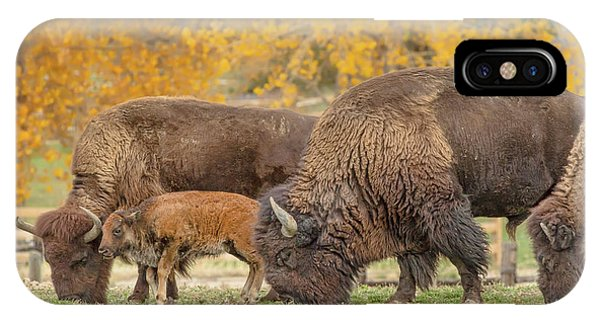 Bison Family Nation IPhone Case