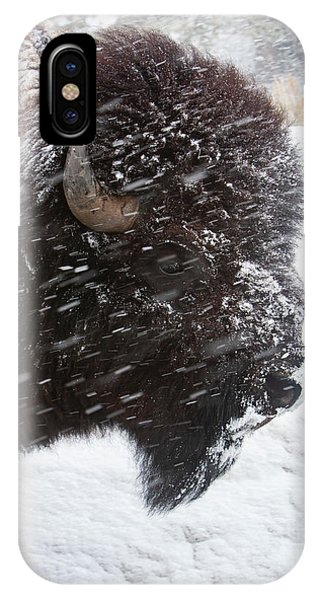 Bison In Snow IPhone Case