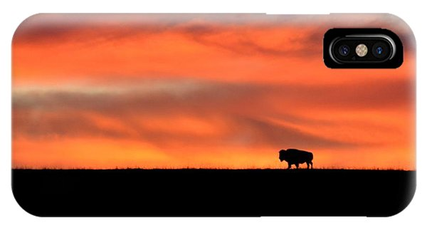 Bison In The Morning Light IPhone Case