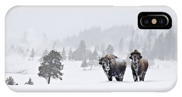 Bison In The Snow IPhone Case
