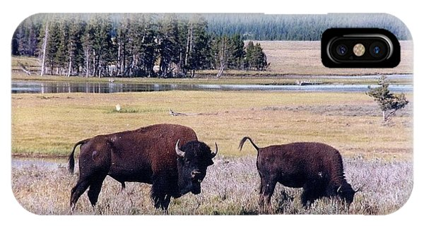 Bison In Yellowstone IPhone Case
