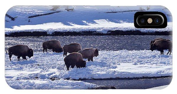 Bison On River Strand Landscape IPhone Case