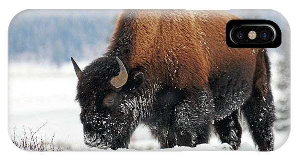 Bison Roaming In The Lamar Valley IPhone Case