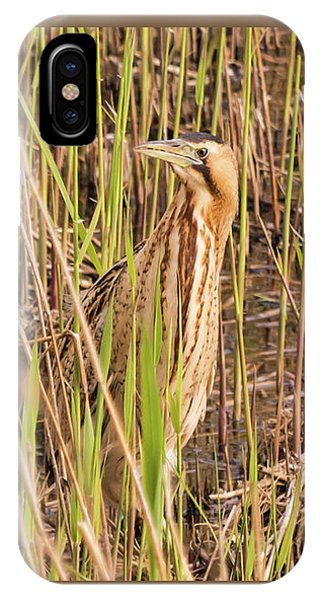 Bittern In The Reeds IPhone Case