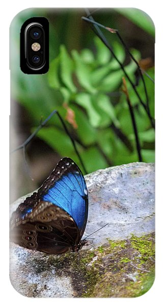 IPhone Case featuring the photograph Black And Blue Butterfly Eating by Raphael Lopez