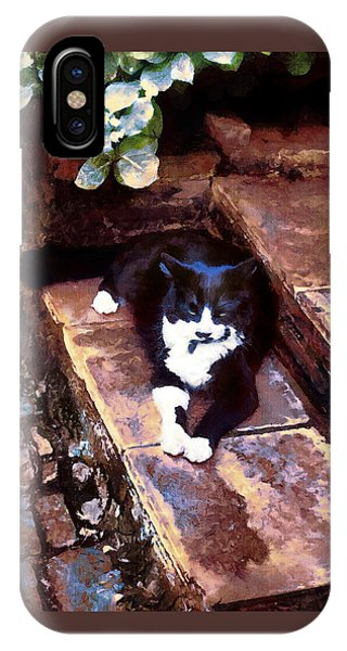 Black And White Cat Resting Regally IPhone Case