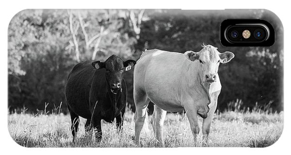 Black And White Cows IPhone Case
