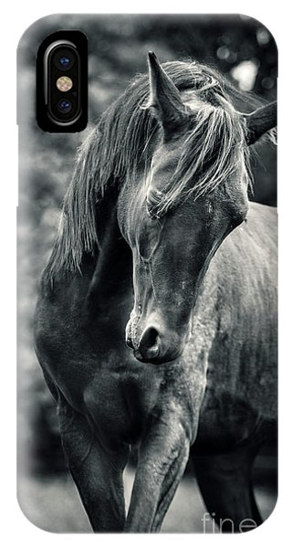 Black And White Portrait Of Horse IPhone Case