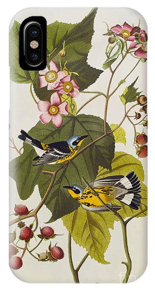 Black And Yellow Warbler IPhone Case
