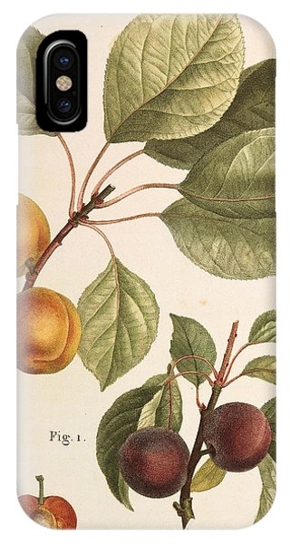 Black Apricot And Apricot Plants IPhone Case