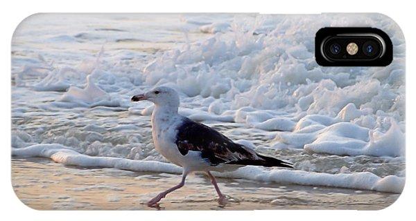 Black-backed Gull IPhone Case