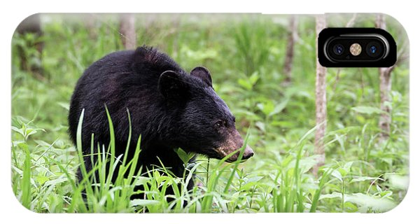 IPhone Case featuring the photograph Black Bear by Andrea Silies