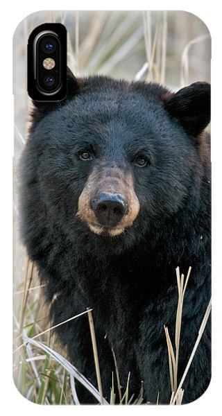 Black Bear Closeup IPhone Case
