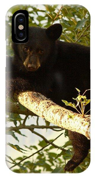 Black Bear Cub Resting On A Tree Branch IPhone Case