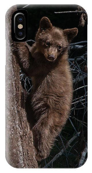Black Bear Cub Sequoia National Park IPhone Case