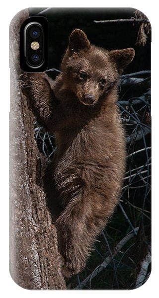 Black Bear Cub Sequoia National Park IPhone Case