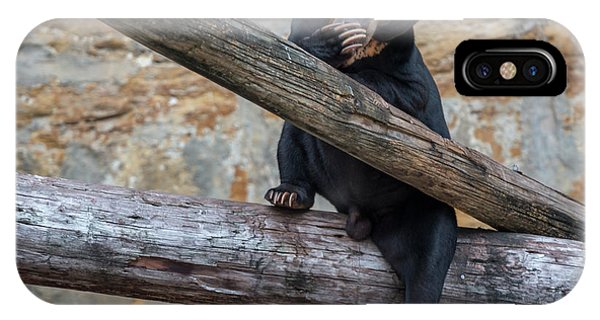 Black Bear Cub Sitting On Tree Trunk IPhone Case