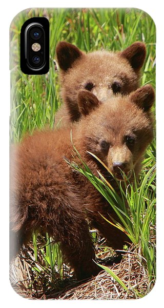 Black Bear Cubs IPhone Case