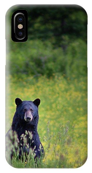 Black Bear Lookin At Me IPhone Case