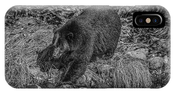 Black Bear Salmon Seeker IPhone Case