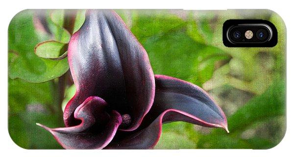 Black Beauty IPhone Case