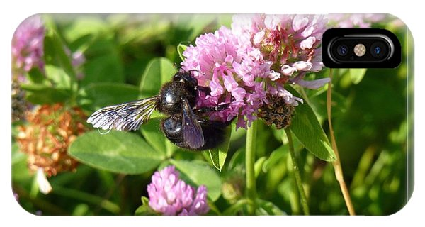 Black Bee On Small Purple Flower IPhone Case