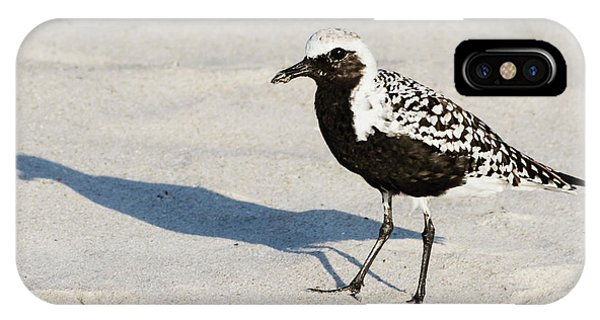 Black-bellied Plover II IPhone Case