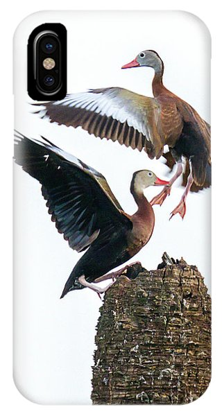 Black-bellied Whistling Duck Dance IPhone Case
