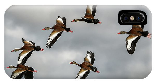 Black Bellied Whistling Ducks IPhone Case